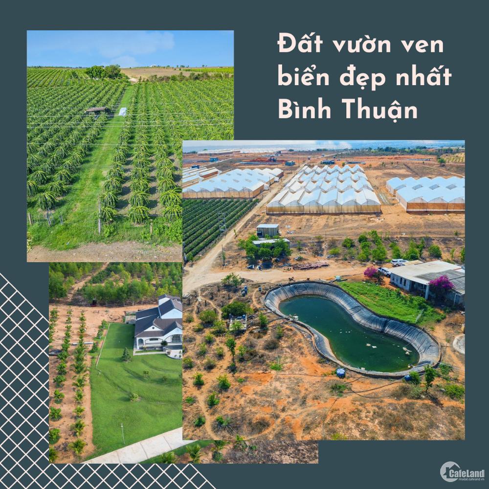 Cần bán đất vuờn Bình Thuận cách DT716 200m , diện tích 5000m2