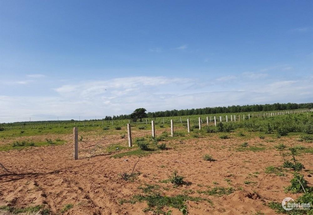 Đất Phan Thanh cách QL1A chỉ 700m, sẵn sổ, giá 800tr 1ha