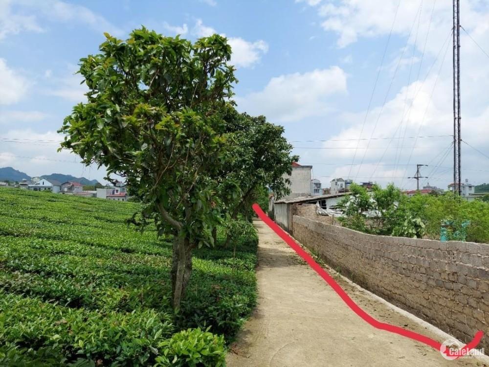 Bán gấp lô đất ở Nông Trường chè, Mộc Châu, Sơn La.