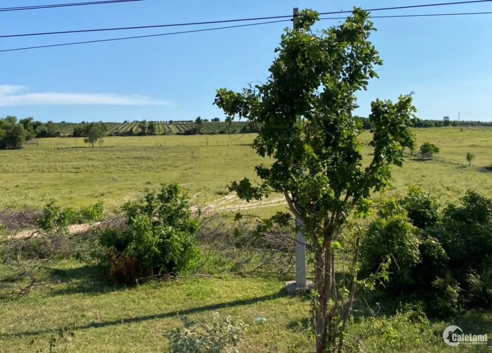 2 lô đất bắc bình gần liên huyện, dân cư từ 90k/m2 tặng đến 10 chỉ Lh 0938677909