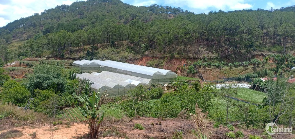 Bán 2,146.2 m2 đất, gần suối Bảo Đại, P11 TP. Đà Lạt, Lâm Đồng