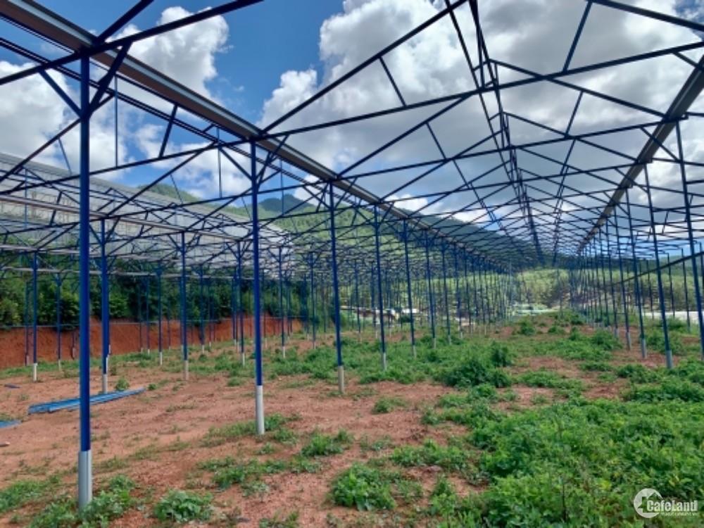 Đất vườn giá rẻ tại lạc dương lâm đồng