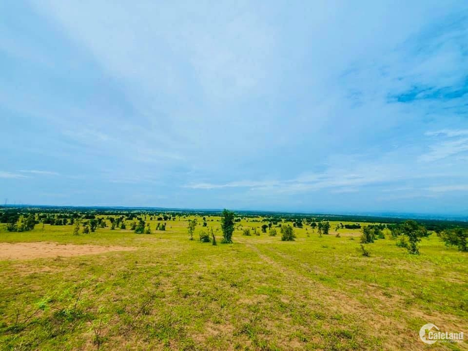 Bán 13,748m2 đất bình tân 95k/m2 gần kdl sinh thái safari ck 10% Lh 0938677909