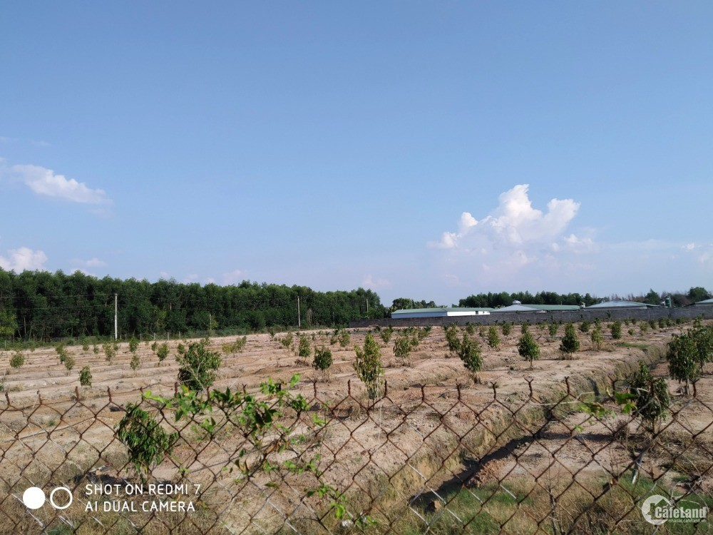 Bán 3.1 hecta đất trồng cây lâu năm xã Phú Thanh, H. Tân Phú, Đồng Nai