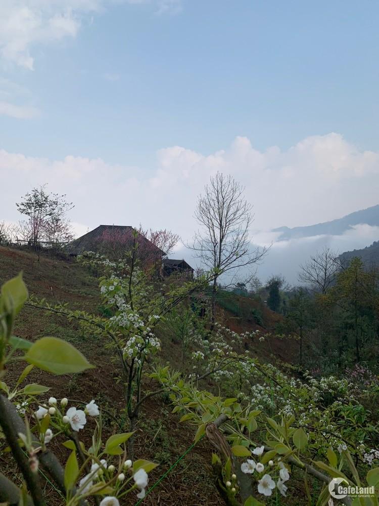 VỊ TRÍ VÀNG Y TÝ - BÁT XÁT Lào Cai -Bán Lô đất 2500m Mò Phú Chải giá cực rẻ VIEW
