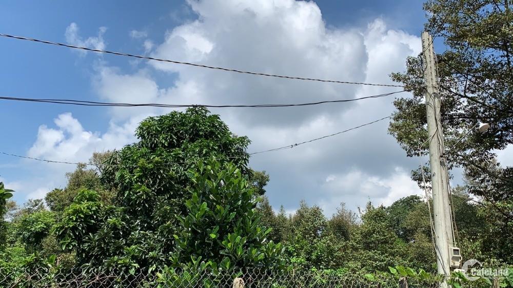 Bán vườn trái cây có 62m mặt tiền đường nhựa, cách QL56 chỉ 3,5km tại Xà Bang