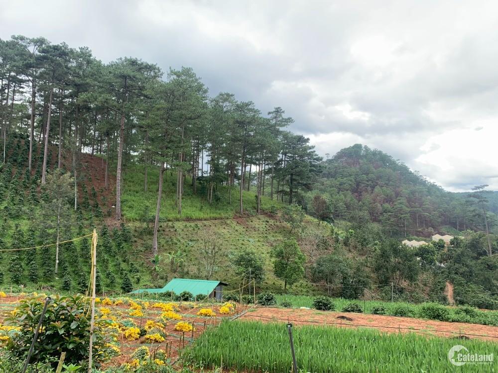 7000m đất xuân thọ. đất bằng phẳng view đẹp,sẵn nhà gỗ,hồ cá. cách quốc lộ 2km.