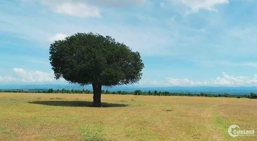 Đất vườn Bình Thuận sổ hồng riêng gần KDL SAFARI tập đoàn Rạng Đông chỉ 90k/m2