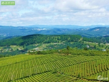 Đất nghỉ dưỡng View đồi, vị trí cực đẹp tại TP.BẢO LỘC chỉ 450tr/nền