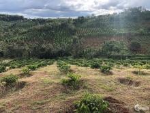 Bán 4,4 hecta đất trồng cây nông nghiệp đã có cây có đầy đủ cách ql14 500m