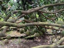 Bán vườn bưởi Bình Lục, xã Bình Lợi, Vĩnh Cữu. gần 2400m2.Giá 5ty5.