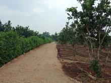 Bán đất vườn nghỉ dưỡng Cẩm Mỹ Đồng Nai