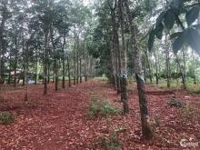 Đất lớn 1158m2 (33.5*34.6m)  Đình Phong Phú, P. Tăng Nhơn Phú B, Q9