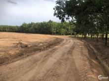 Đất sào giá rẻ tại Bình Phước chỉ 219 triệu/1000m2 sổ sẵn công chứng liền