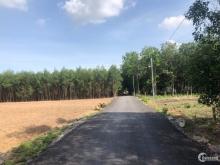 Chính chủ bán 1 mẫu đất Tân Hiệp, gần sân bayLong Thành có thổ cư, 2.2 triệu/m2