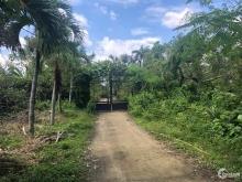 Đất Nền Khu Vực Long Phước, Phú Hữu, Quận 9. Giá Tốt