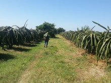 Bán 20,000m2 đất nông nghiệp hồng thái 1,4 tỷ cách bàu trắng 4km Lh 0938677909