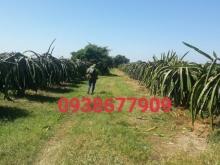 Bán 19,400m đất nông nghiệp hồng thái 75k/m gần liên xã cách biển 5km 0385230667