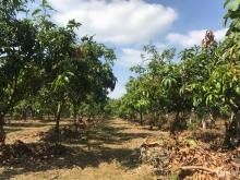 Chính chủ cần cho ra gấp hơn 1 héc ta đất vườn tại Định Quán-Đồng Nai