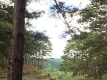 Chính chủ cần bán đất tại: Thôn1 – xã Mê Linh – Lâm Hà – Lâm Đồng