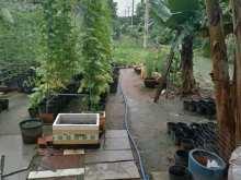 Nhà vườn ngay sau chợ Hòa Phú giá 2 tỷ đường ô tô