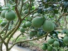 D076- Bán vườn trái cây 3000m2 có suối lớn bao quanh, ven sân bay Long Thành tại