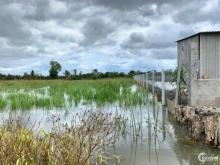 Đất lúa giá rẽ 1023m2 tại Xã Hoà Khánh Nam, Đức Hoà, Long An