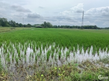 Chính chủ cần bán gấp lô đất lúa giá rẽ 982m2 tại Ấp 4, Xã Đức Hoà Đông, Đức Hoà