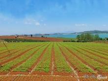 Đất TC view hồ Đại Ninh,mặt tiền QL 28B xã Ninh Gia,Đức Trọng,LĐ,DT:10x65,4.8tỷ