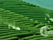 Bán mảnh đất view siêu đẹp tại Chiềng Đi, Mộc Châu thích hợp làm nhà vườn
