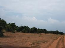 Bán 5822m đất nông nghiệp hồng thái gần QL và liên huyện chỉ 523tr
