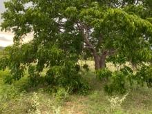 Bán đất vườn hồng thái mặt tiền đường liên huyện giá chỉ 130k/m2 Lh 0385230667