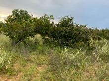 Bán 11,336m2 đất vườn hồng thái 150k/m2 MT liên xã cách biển 6km