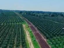 2 Lô đất nông nghiệp hồng thái, bắc bình giá thấp vị trí đẹp Lh 0938677909 Hiền