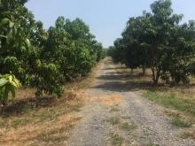 Qua tết cần tiền xoay sở cuộc sống bán lô đất mặt đường 1009m2 chỉ với 540 triệu
