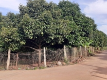 Bán đất biệt thự vườn 1000m2 đang trồng cây ăn trái, đường Trảng Bom - Xuân Lộc
