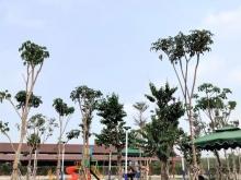Đất Trung Tâm Thành Phố Tây Ninh
