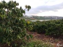 Bán Đất Nông Nghiệp Thị Trấn Di Linh chính chủ- View Hồ Đông Di Linh, Lâm Đồng