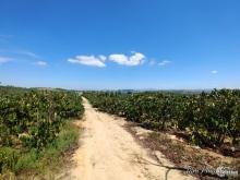 Bán 5 sào đất rẩy có sổ đỏ tại mỏ đá Thiện Chí,xã Ninh Gia,,250 triệu/sào TL