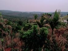 Đất nông nghiệp view farm nghỉ dưỡng tại Đắk Song