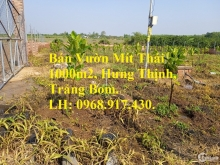 Kẹt tiền bán vườn mít 1000m2 xã Hưng Thịnh, huyện Trảng Bom