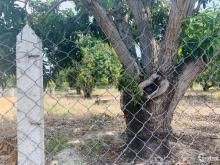 Chủ cần tiền bán nhanh lô đất vườn xoài ngay đường lê duẩn Qh 40M