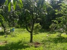 Bán gấp lô đất vườn trồng xoài dt 1200m2 có 100m2 TC ở Định Quán giá 540tr/sào.