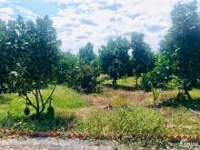 Bán gấp 2 miếng đất Vườn trái cây sẳn,ngay Sông La Ngà,Sổ hồng Bao Sang Sổ