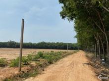 Đất vườn  1000m2 tại Xã Minh Hòa, Dầu Tiếng, Bình Dương giá cực rẽ để đầu tư