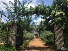 Bán gấp lô đất vườn giá rẻ dt 1000m2 ( quy hoạch full 100% thổ cư ) ở Đồng Nai.