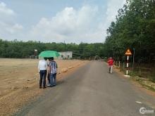 Bán lô đất sổ sẵn mùa dịch tại Đồng Phú, Bình Phước