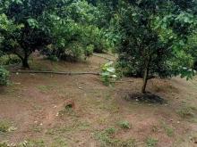 Bán vườn trái cây 1.2 sào , xã Vĩnh Tân , Vĩnh Cửu, Đồng Nai