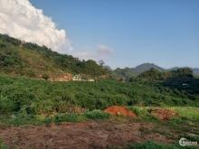 Bán lô 3000m2 vườn mận đâng thu hoạch. Sổ chung, tách sổ 50 năm trao tay