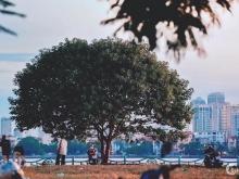 Bán Đất Mặt Phố Trích Sài vị trí đẹp nhất Quận Tây Hồ mặt tiền 14m DT 350 135 tỷ